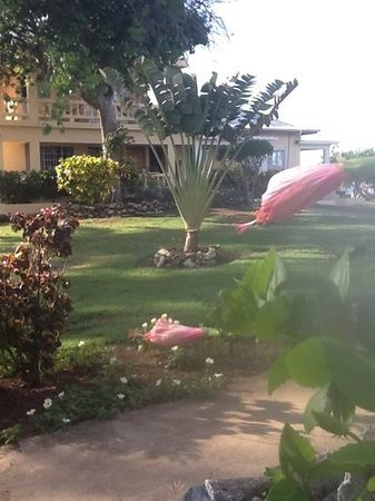 Westender Inn: manicured grounds offering variety of island flowers, trees & vegitation