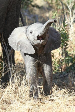 Chobe National Park, Botswana: Ellies galore, big 'n small you will see them all xxxx