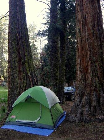 Azalea Campground: tent!