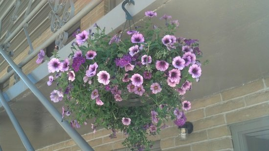 Rustic Inn: Petunias abound!