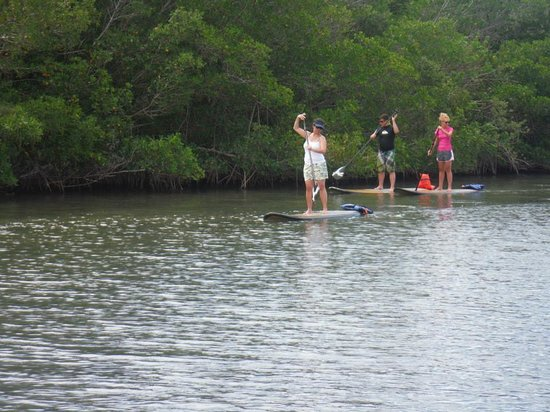 SUP Eco Adventures: Paddle Boarding on the open water