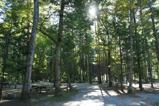 Boston Minuteman Campground: Beautiful grounds