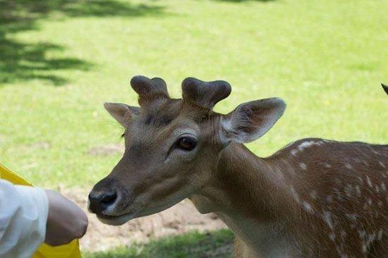 Wildpark Dusseldorf: feeding deer