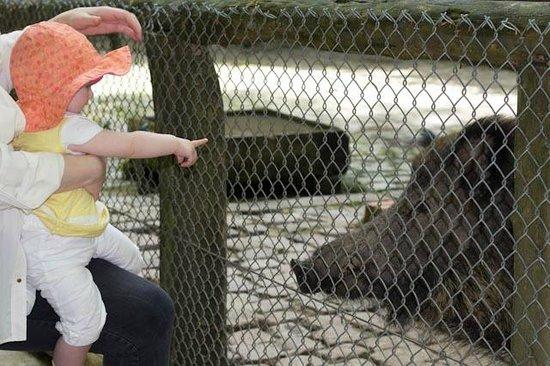 Wildpark Dusseldorf: piggy!