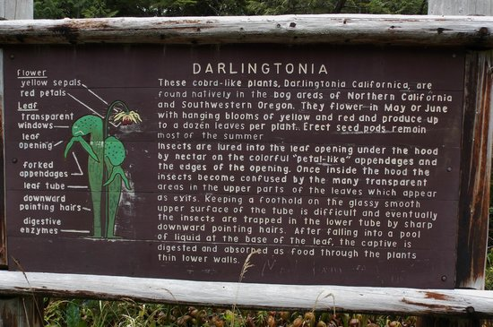 Darlingtonia State Natural Site: A sign explaining the way these plants capture their prey