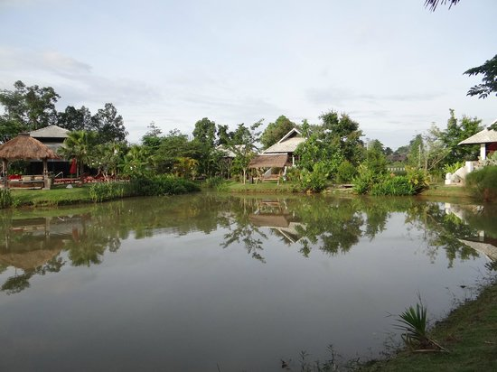 Baan Chai Thung: Pond front of pool