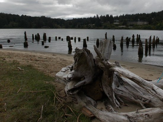 Siuslaw River Coffee Roasters: The river offers some interesting photo opportunity
