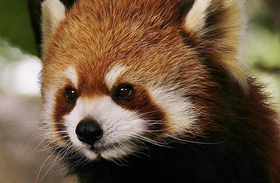 Nogeyama Zoo: 私はメスです