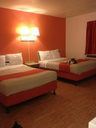 Motel 6 Bangor: The New Look - cat not included