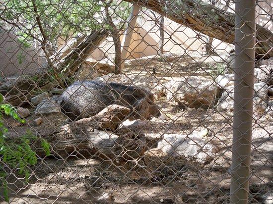 Desert Garden Picture Of Living Desert Zoo And Gardens State Park Carlsbad Tripadvisor