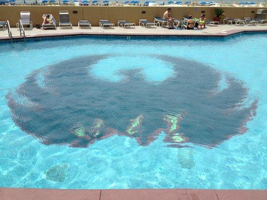 Phoenix V: phoenix design in the pool