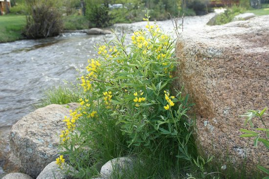 Riverview Pines: Wildflowers at Edge of River