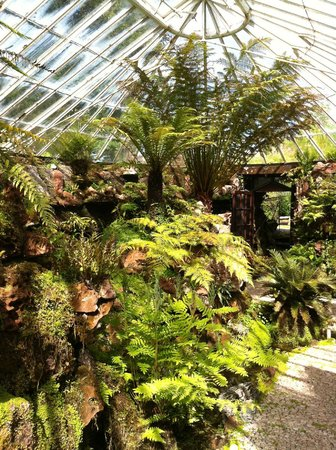 Ascog Hall Gardens and Victorian Fernery : Many ferns and the entrance to the fernery