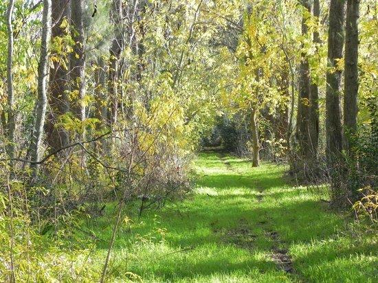 Estancia Santa Rita: Caminata por el bosque