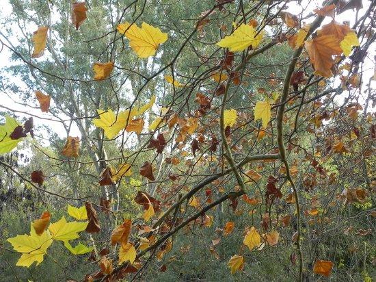 Estancia Santa Rita: El bosque en otoño