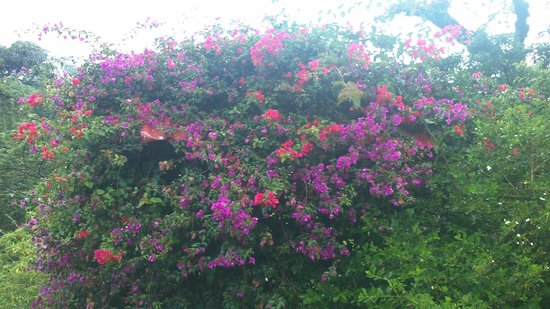 Hotel Montana Monteverde : beautiful local flowers
