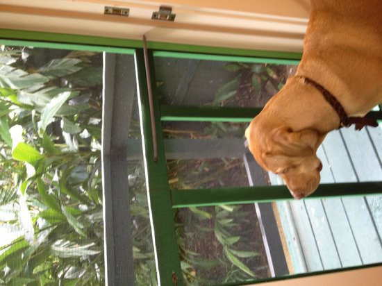 Green House Inn: Our room had a locking screen door where Dozer could look out