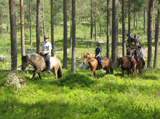 Mesnabakken Guest House: The great forrest of Norway is huge, and we know a lot of different paths