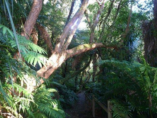 นิวพลีมัท, นิวซีแลนด์: Dawes Walk to Waterwheel
