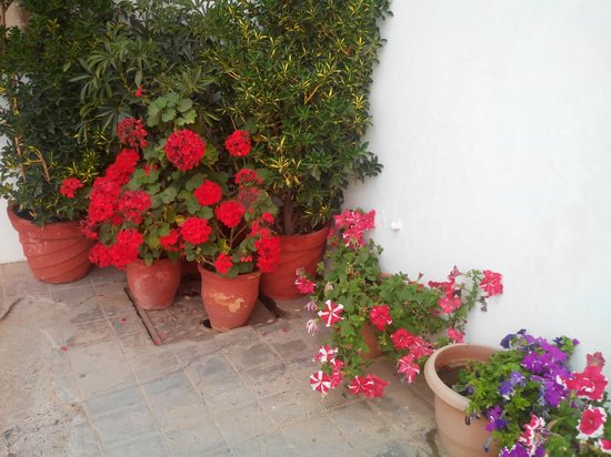 Hotel Himalayan Club: Flower Pots outside the room