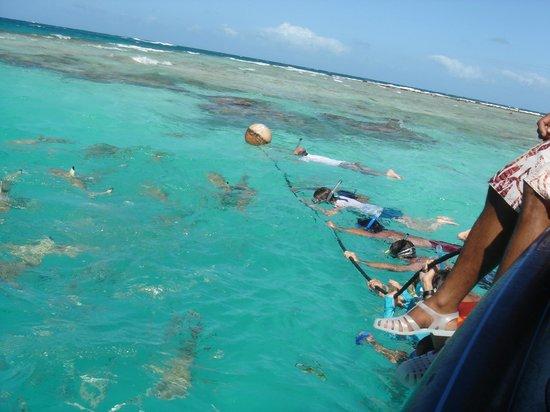 bagno con gli squali a blue lagoon - foto di hotel kia ora resort