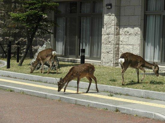 Ebino Kogenso: 建物前に来た鹿