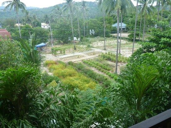 Hansar Samui Resort: Hotel herb and vege garden at back of hotel
