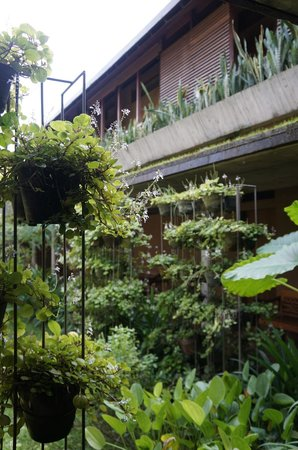 Rumah Turi: lush little garden
