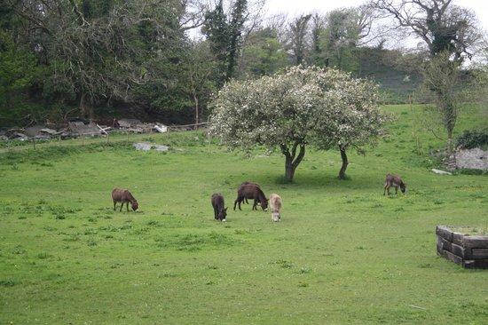 Falls Hotel & Spa: Donkeys