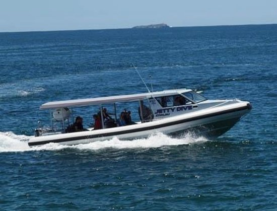 Jetty Dive Centre: Wildfin out Whale Watching