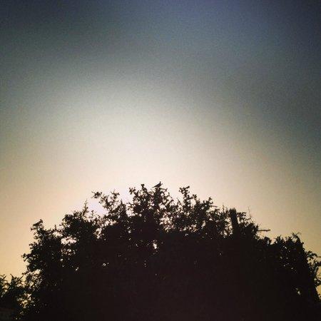Dar Maris Maison d'hotes : Coucher de soleil sur les arganiers