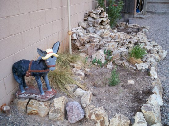 Las Cruces KOA: Burro statue near pool