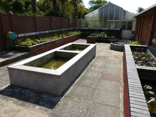 Bennetts Water Gardens: The aquatic plant shop