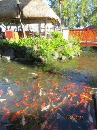 Hilton Mauritius Resort & Spa: lagune autour du restaurant