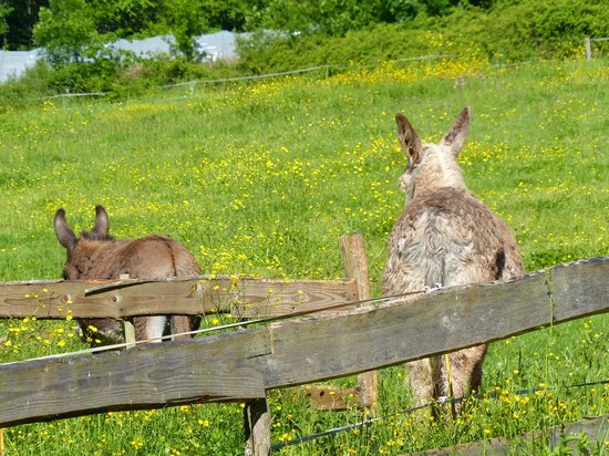 Domayne les Rues: Berna and Fred's two pet donkeys