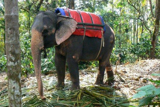 Deshadan Mountain Resorts : Centre d'élevage des éléphnats au mileu des caféiers