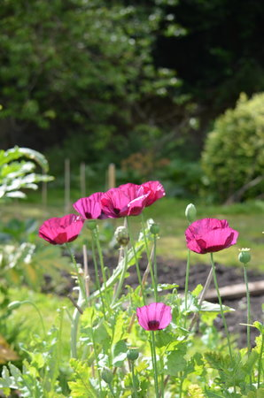 Quarter Bed and Breakfast: Poppies