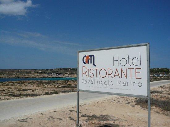 Hotel Cavalluccio Marino : Direttamente sul mare