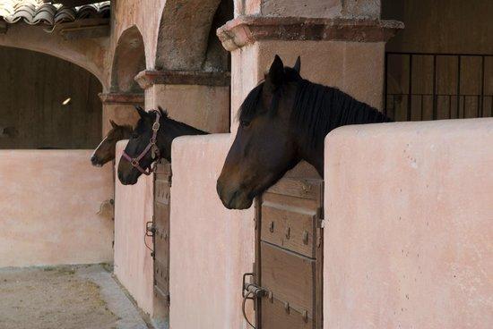 Hacienda Las Trancas : Horse-back Riding Included in Stay