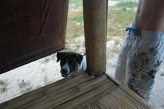 Kanawa Resort: Deco the Dive Centre dog