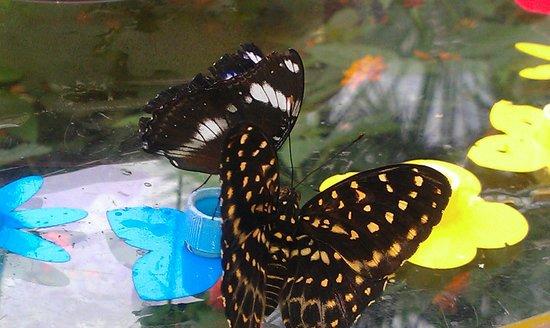 Papiliorama: Immer wieder neue Wujnder