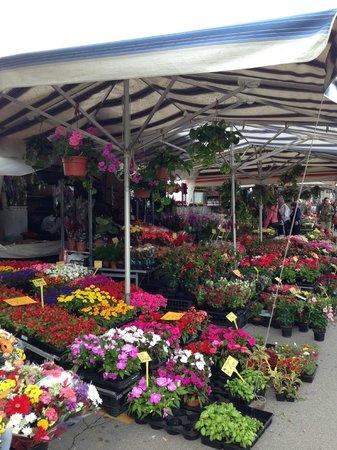 Fiori al mercato foto di prato della valle padova for Mercato prato