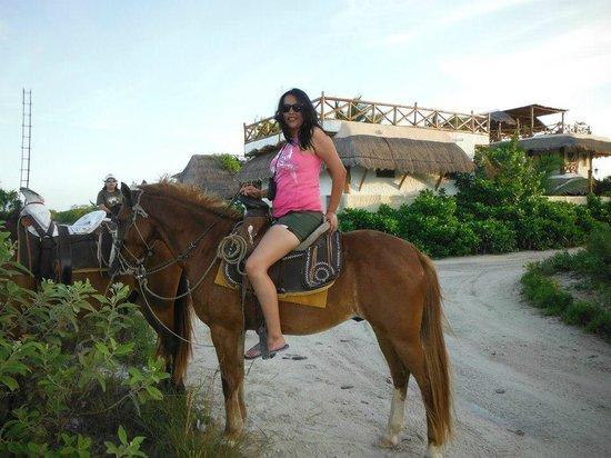Casa BlatHa : Caballos para recorrer toda la orilla de la playa