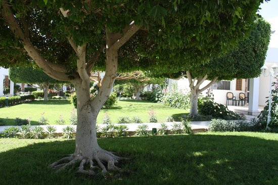 Maritim Jolie Ville Resort & Casino Sharm El-Sheikh: Lovely greenery