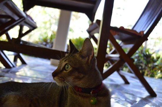 Tiing Gading Bungalows: Cat