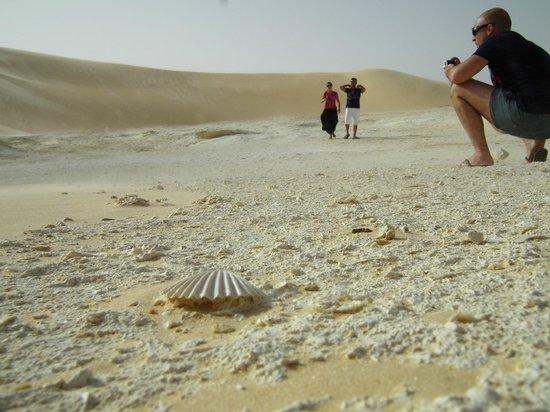 Great Sand Sea: fondo di mare antico: una conchiglia fossilizzata