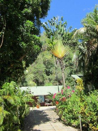Hotel Gerard et Francine: Il giardino
