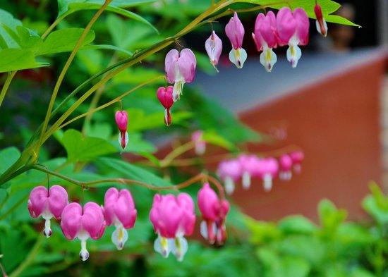 Reflections Inn: Garden of eden