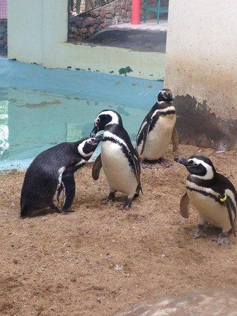 Pomerode: Penguins
