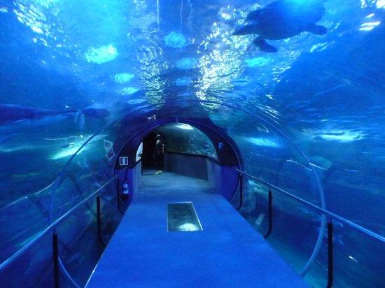 Hotel Gran Bahia Bernardo : Ausflugsziel Meeresaquarium